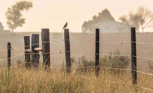 Wardell Angus Ranch_ John Fielder